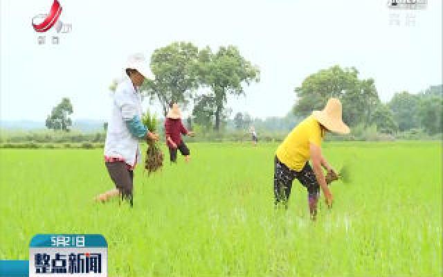 奉新:抢农时强田管 确保早稻丰收