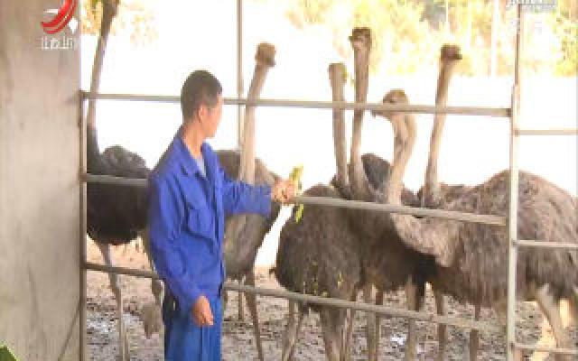 江西率先出台在养禁食野生动物处置意见
