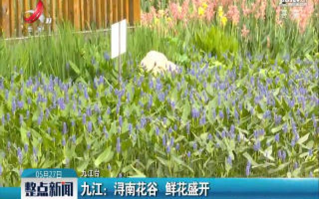 九江:浔南花谷 鲜花盛开