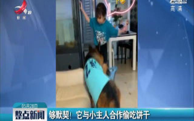 深圳:够默契!它与小主人合作偷吃饼干