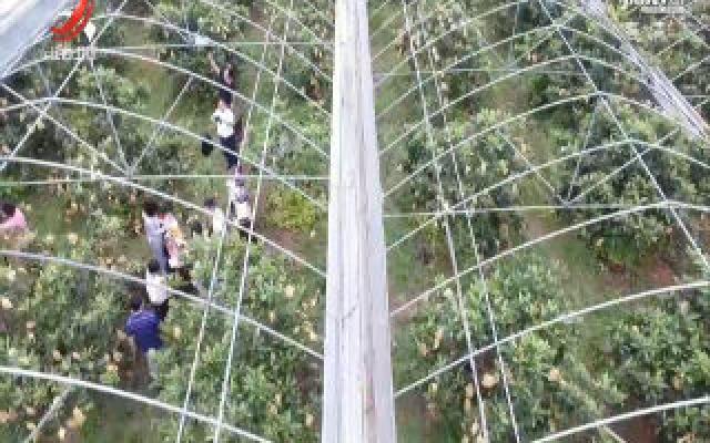 抚州市临川区开展扶贫扶志助农直播活动