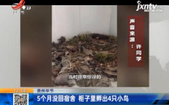 贵州毕节:5个月没回宿舍 柜子里孵出4只小鸟