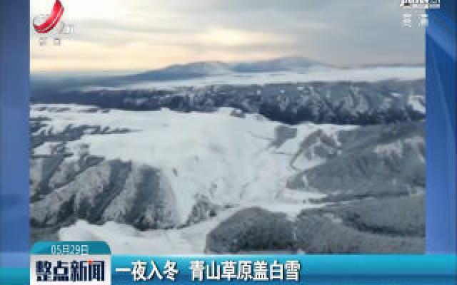甘肃:一夜入冬 青山草原盖白雪