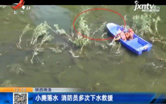 陕西商洛:小麂落水 消防员多次下水救援