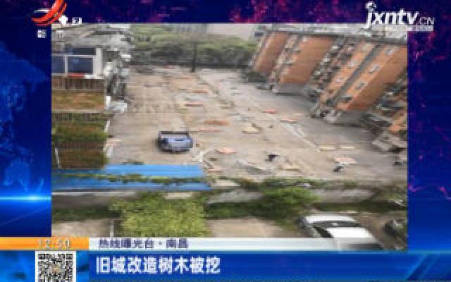 【热线曝光台】南昌:旧城改造树木被挖