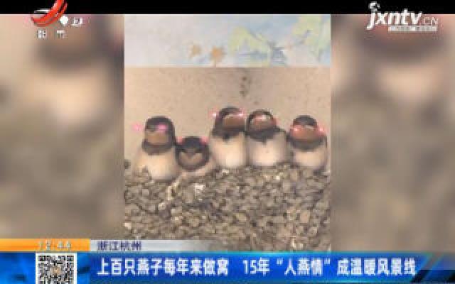 """浙江杭州:上百只燕子每年来做窝 15年""""人燕情""""成温暖风景线"""
