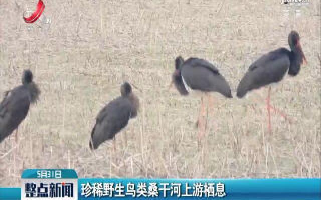 珍稀野生鸟类桑干河上游栖息