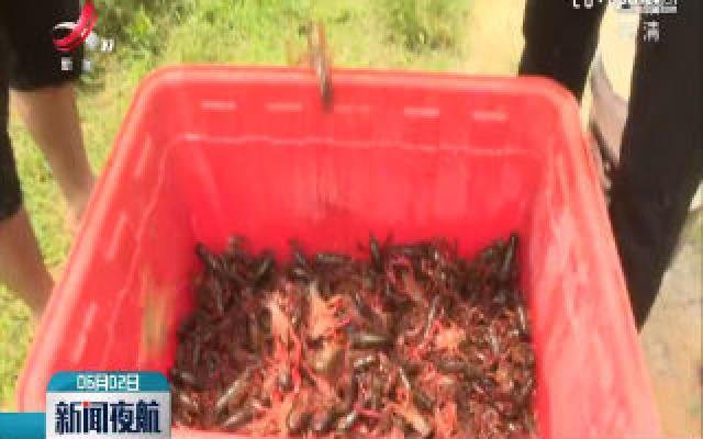 赣州:小龙虾特色养殖 闯新路带民富