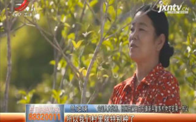 【关注脱贫攻坚】全国人大代表兰念瑛:畲族村里的脱贫带头人