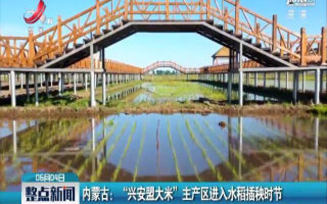 """内蒙古: """"兴安盟大米"""" 主产区进入水稻插秧时节"""