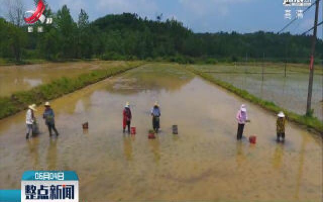 未来持续强降雨 农业生产需注意