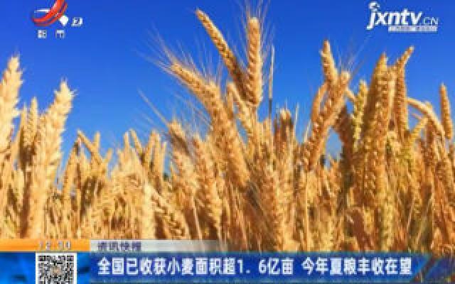 全国已收获小麦面积超1.6亿亩 2020年夏粮丰收在望