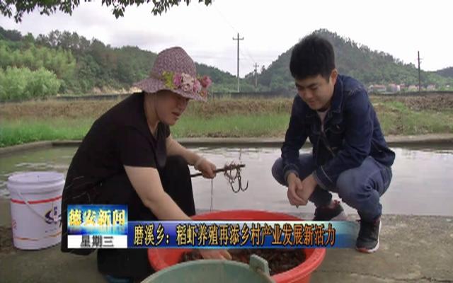 磨溪乡:稻虾养殖再添乡村产业发展新活力