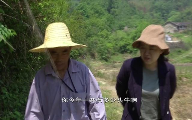 71岁高山养牛倌张祖炎:我相信以后的日子越来越好