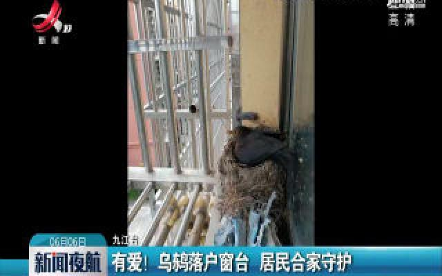 九江:有爱!乌鸫落户窗台 居民合家守护
