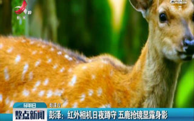 彭泽:红外相机日夜蹲守 五鹿抢镜显露身影