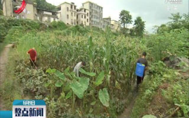 【直播连线】萍乡:积水消退 灾后清淤防疫进行中