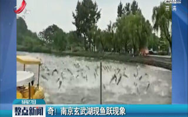 奇!南京玄武湖现鱼跃现象