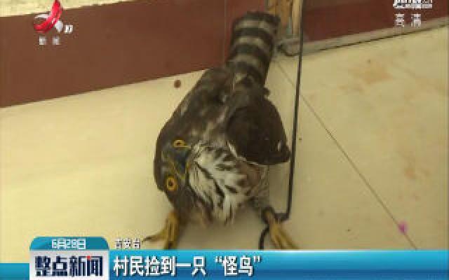 """吉安:村民捡到一只""""怪鸟"""""""