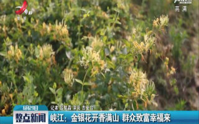 峡江:金银花开香满山 群众致富幸福来
