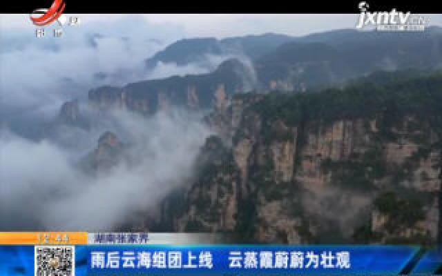 湖南张家界:雨后云海组团上线 云蒸霞蔚蔚为壮观