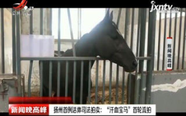 """扬州首例活体司法拍卖:""""汗血宝马"""" 首轮流拍"""