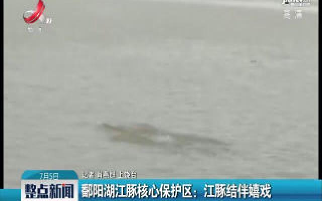 鄱阳湖江豚核心保护区:江豚结伴嬉戏