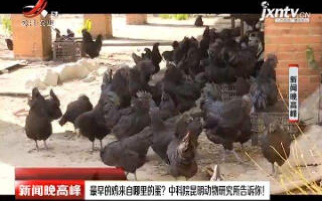 最早的鸡来自哪里的蛋? 中科院昆明动物研究所告诉你!
