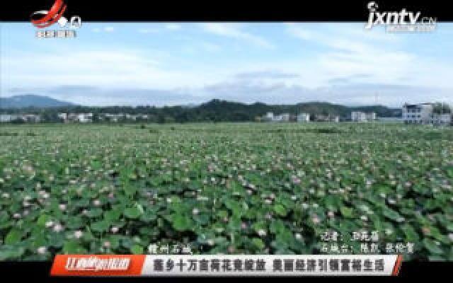 赣州石城:莲乡十万亩荷花竞绽放 美丽经济引领富裕生活