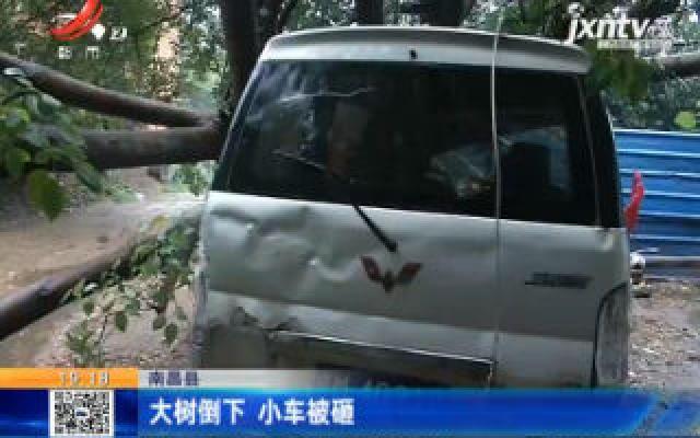 南昌县:大树倒下 小车被砸