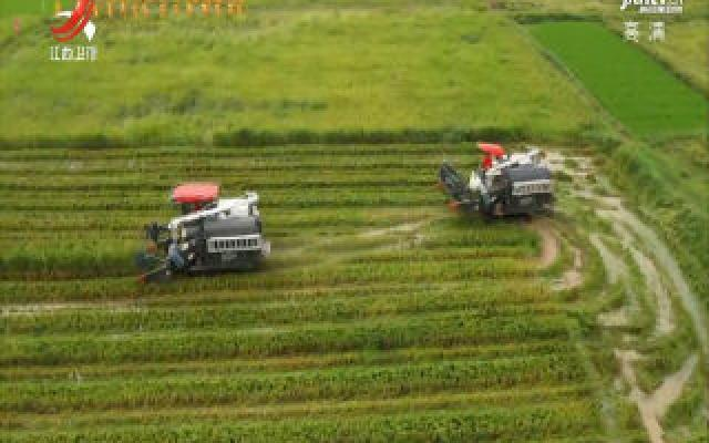 万年:24万亩早稻开镰收割