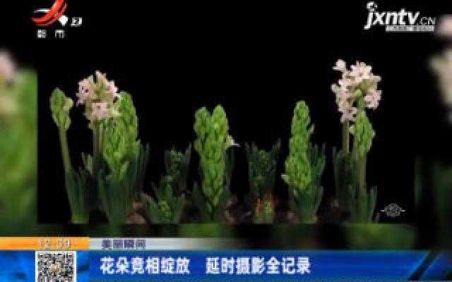 【美丽瞬间】花朵竞相绽放 延时摄影全记录