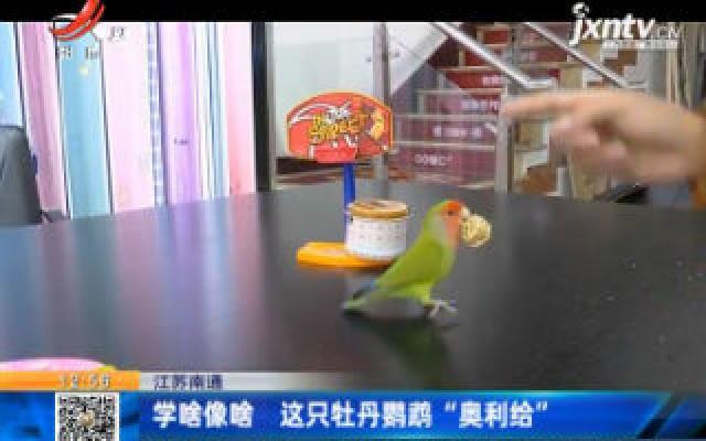 """江苏南通:学啥像啥 这只牡丹鹦鹉""""奥利给"""""""