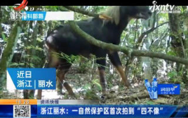 """浙江丽水:一自然保护区首次拍到""""四不像"""""""