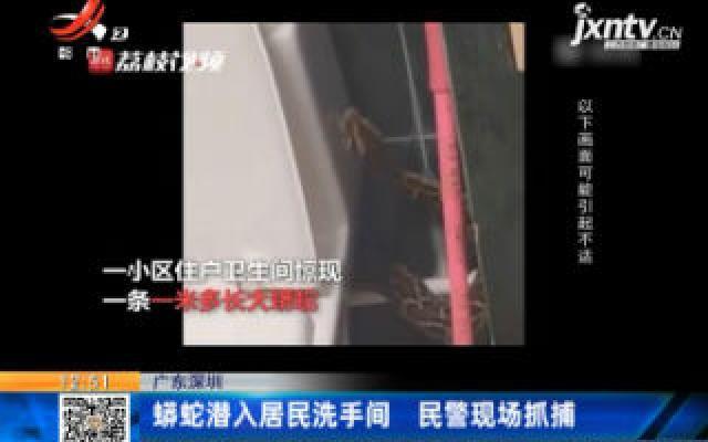 广东深圳:蟒蛇潜入居民洗手间 民警现场抓捕