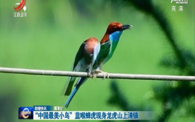 """""""中国最美小鸟""""蓝喉蜂虎现身龙虎山上清镇"""