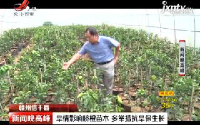 赣州信丰县:旱情影响脐橙苗木 多举措抗旱保生长