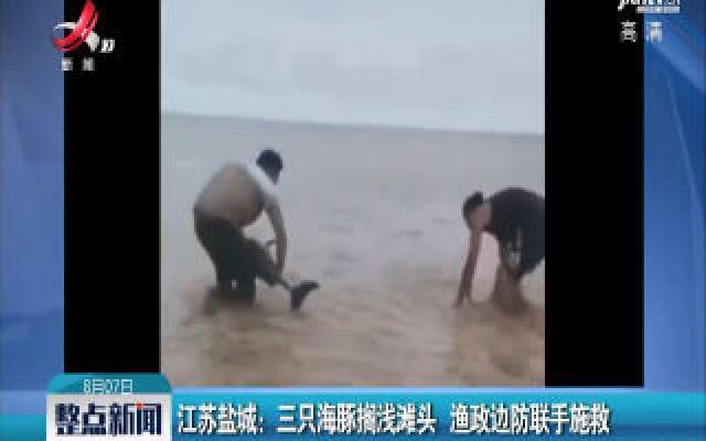 江苏盐城:三只海豚搁浅滩头 渔政边防联手施救