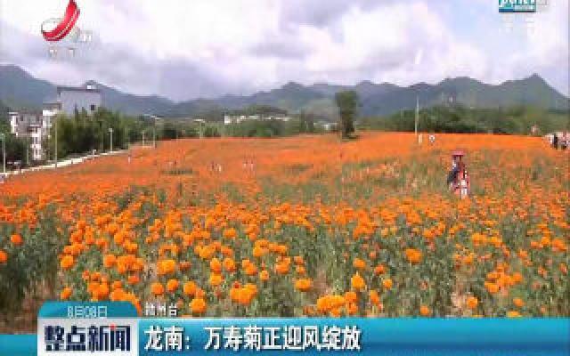 龙南:万寿菊正迎风绽放