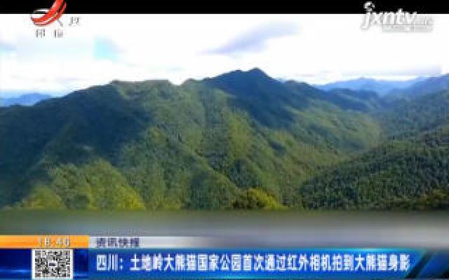 四川:土地岭大熊猫国家公园首次通过红外相机拍到大熊猫身影