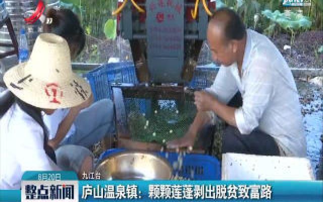 庐山温泉镇:颗颗莲蓬剥出脱贫致富路