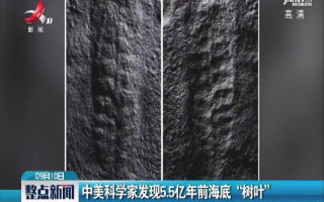 """中美科学家发现5.5亿年前海底""""树叶"""""""