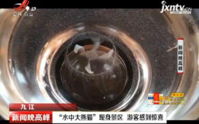 """九江:""""水中大熊猫""""现身景区 游客感到惊喜"""