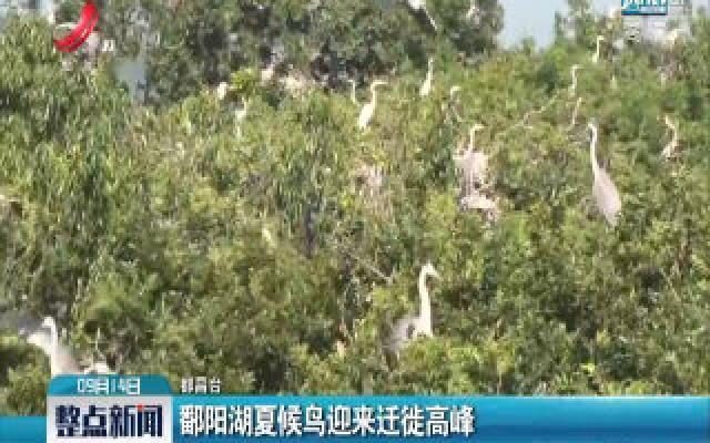 都昌:鄱阳湖夏候鸟迎来迁徙高峰