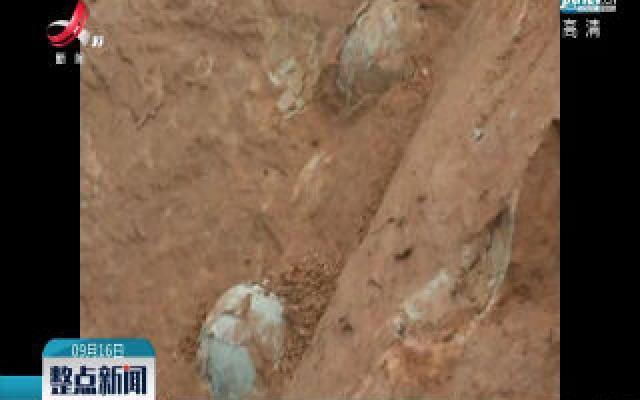上栗发现疑似恐龙蛋化石