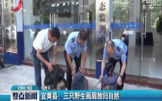 宜黄县:三只野生画眉放归自然