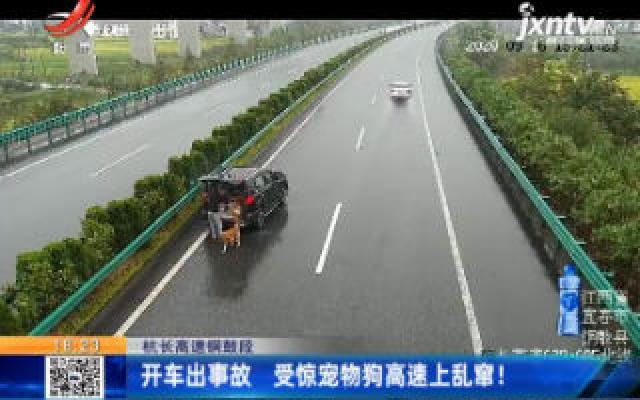 杭长高速铜鼓段:开车出事故 受惊宠物狗高速上乱窜!