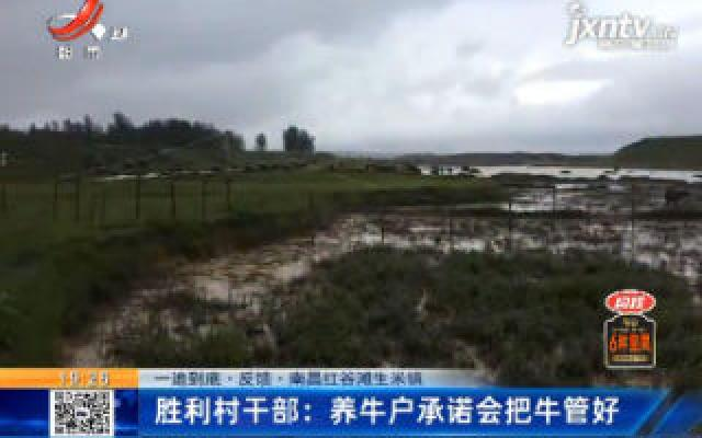 【一追到底·反馈】南昌红谷滩生米镇·胜利村干部:养牛户承诺会把牛管好