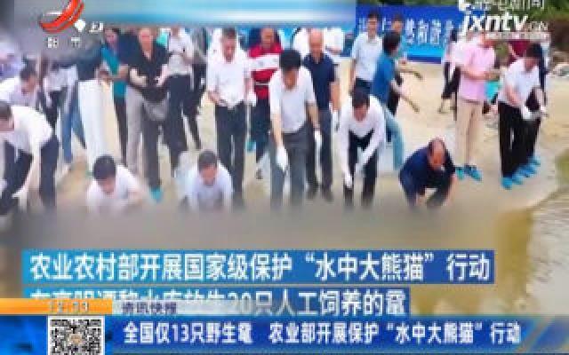"""全国仅13只野生鼋 农业部开展保护""""水中大熊猫""""行动"""