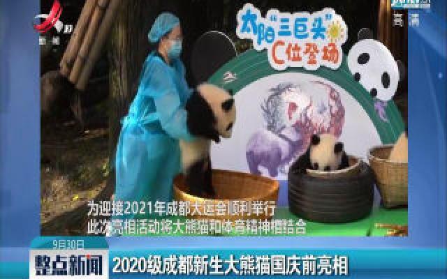 2020级成都新生大熊猫国庆前亮相